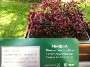 Penicilina - Jardim Botânico de Curitiba